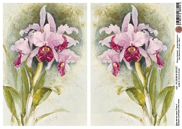 Декупажная карта Орхидея с розовыми лепестками