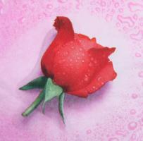 Салфетка для декупажа «Алая роза»