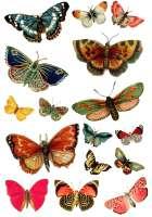 Переводная карта «Бабочки»