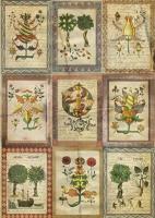 Рисовая карта «Средневековая ботаника»