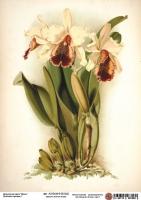 Декупажная карта Кремовые орхидеи 1