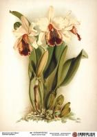 Декупажная карта Кремовые орхидеи 2