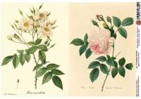 Декупажная карта Ботанический атлас. Страницы 2
