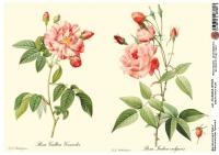 Декупажная карта Ботанический атлас. Страницы 3