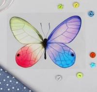 Термотрансфер Бабочка-мотылек