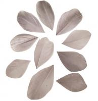 Перья обрезанные светло-серые
